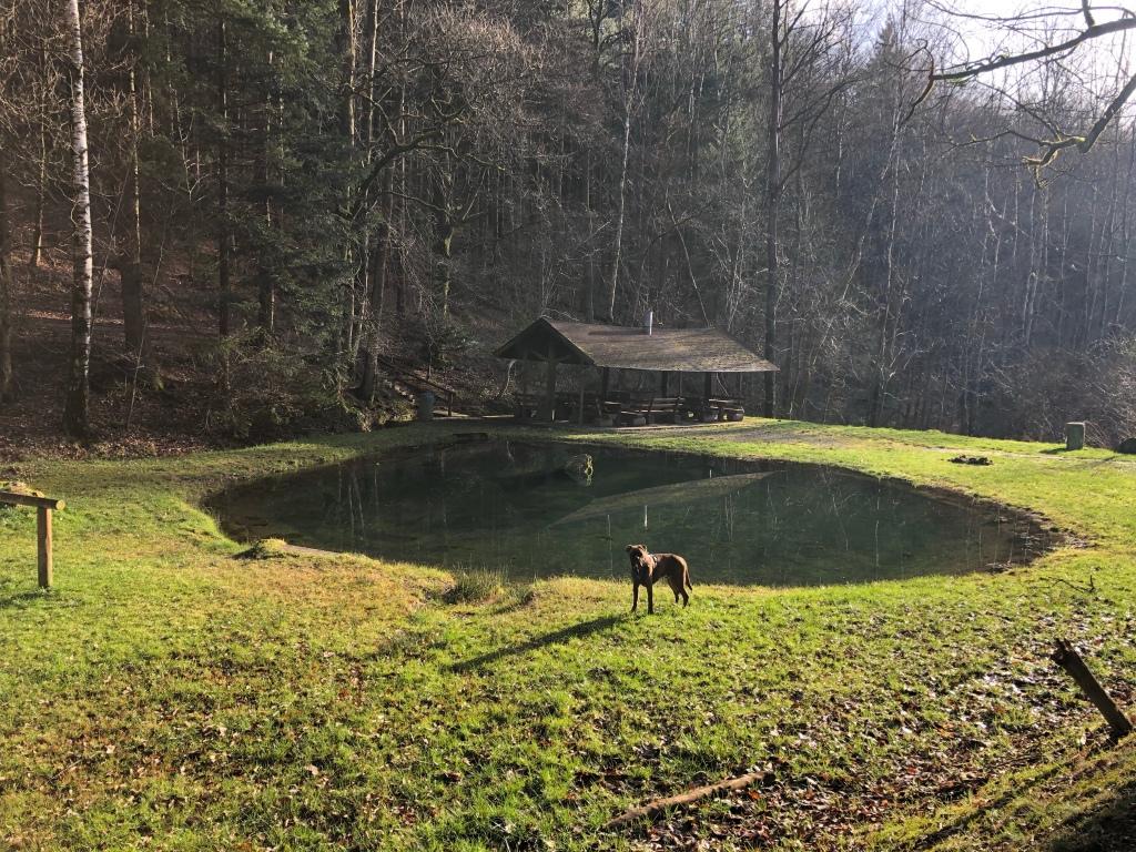 Liederbach  Grillhütte